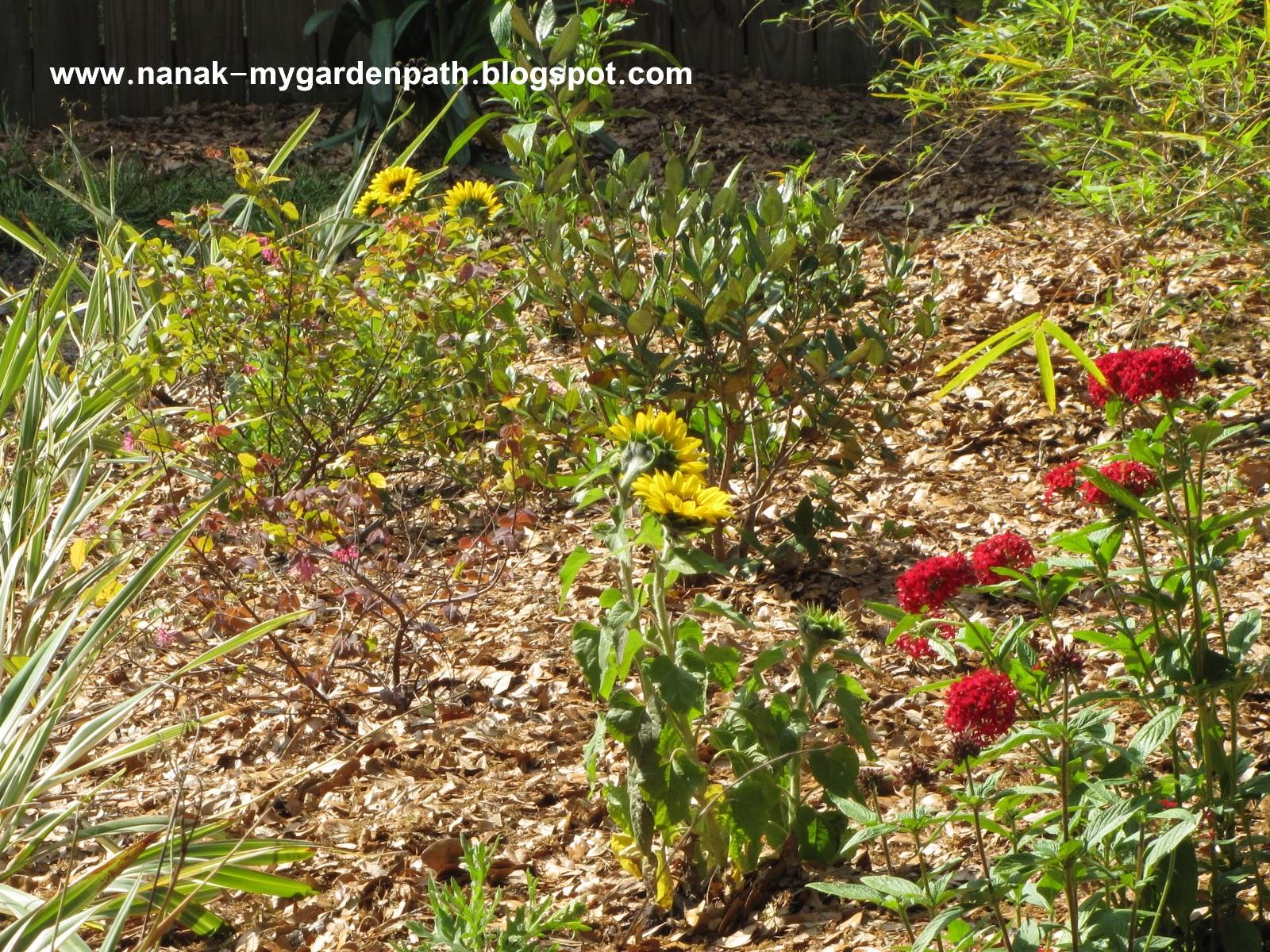 My Garden Path: Bluebird of Happiness
