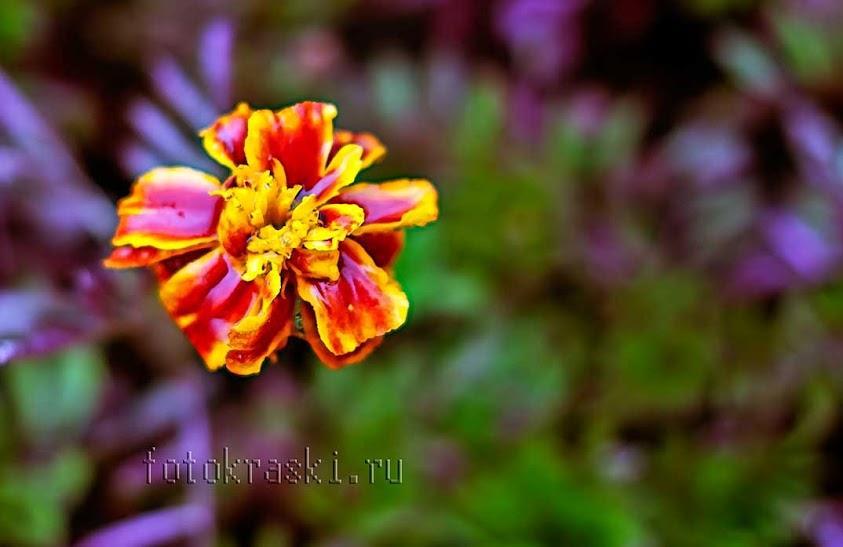 дождь, цветок