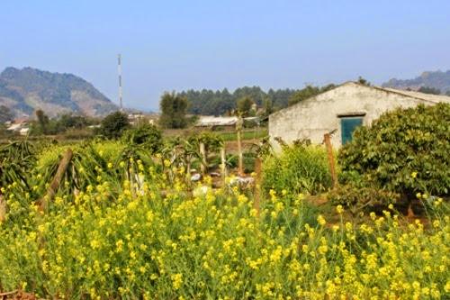 Khám phá thảo nguyên hoa Mộc Châu