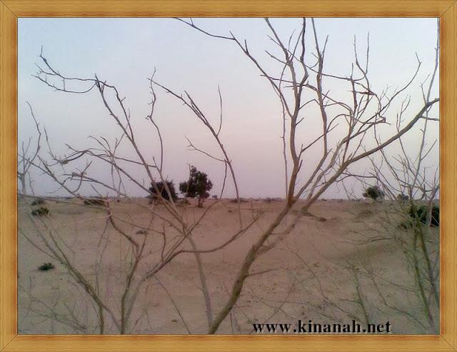مواطن قبيلة الشقفة (الشقيفي الكناني) الماضي t8197-36.jpeg