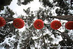 Lanterns for the Chinese New Year Festival in North Hagley Park.