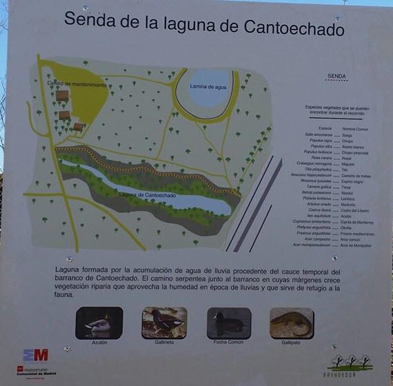 Lagunas artificiales de Cantoechado en el Parque Bosquesur
