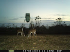 Louisiana Hunting Land Lease Buck Doe Rabbit Duck
