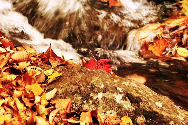 ảnh lá vàng mùa thu rụng bên con suối