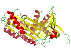 Proteínas simples