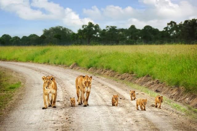 Reserva Maasai Mara - Férias no Quénia