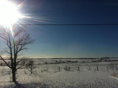 雪に覆われた牧場