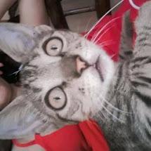 javieramiranda241_348