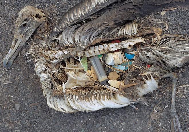 Lixo mata animais