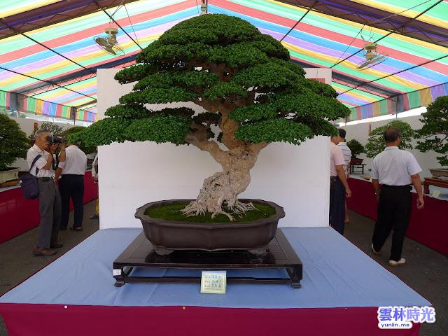 林內-2011盆栽藝術展覽會現場照~│活動