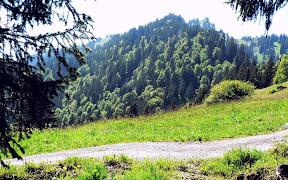 Blick auf Steineberg nahe Krumbachalpe