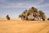 Пальмы Набка