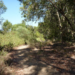 Track through Eucalypt forest Green Point Reserve (402448)