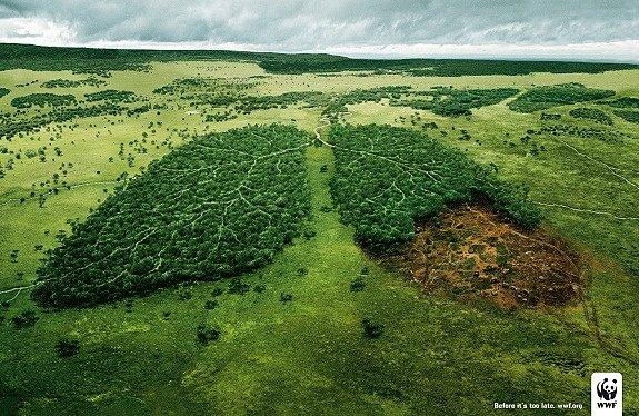 Llamada a la conciencia por la deforestación del planeta