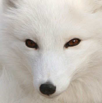 Arthur Fox