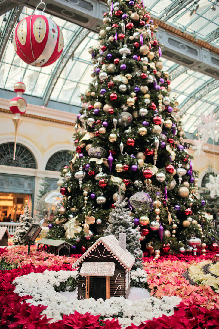 Christmas at Bellagio Botanical Gardens.