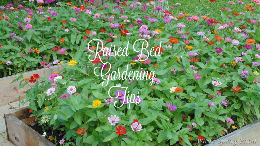 [Raised-Bed-Gardening-Tips4.jpg]