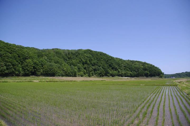 青と緑・北竜町の夏