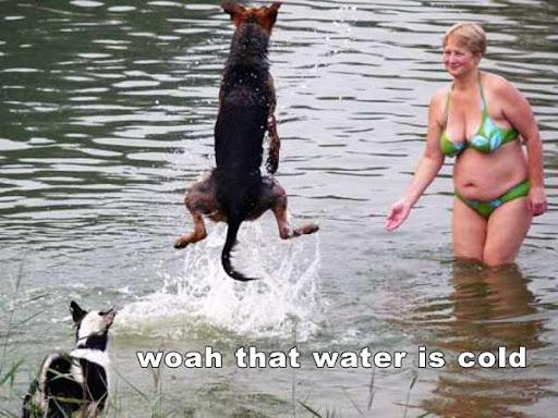 funny dog videos. funny dog videos. funny dogs and cats video. hot