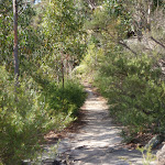 Track to Martin's Lookout (74415)