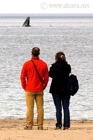 Avistaje de ballenas costero en El Doradillo