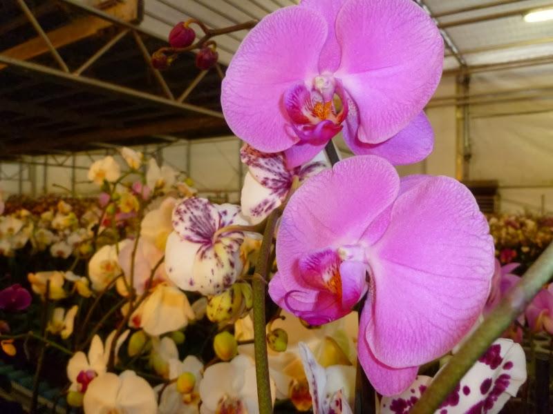 Orchideen in Groningen