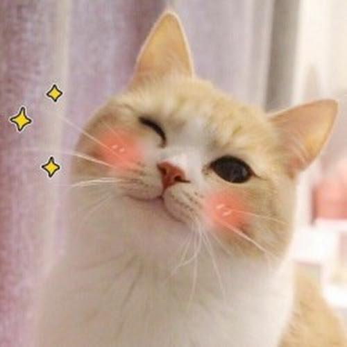 asia321999 Profile Photo