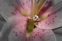 Diamond Among Petals