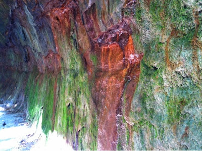 hiking, friends, turkey run, nature, iron, moss
