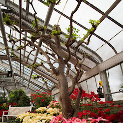 Centennial Park Conservatory's profile photo