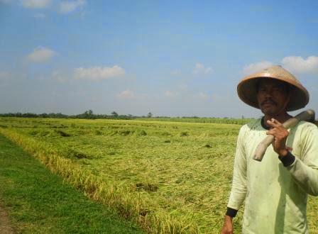 Harga gabah terbaru di kabupaten Ngawi