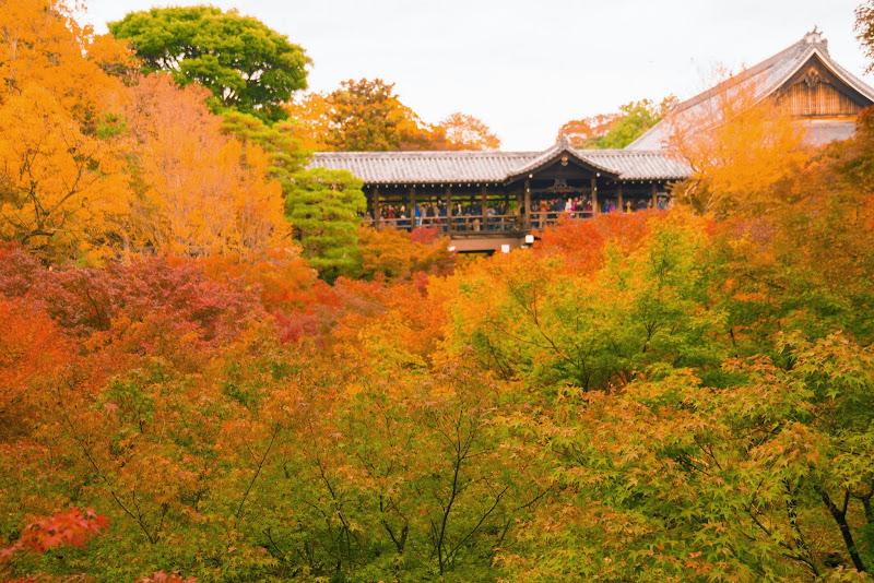 京都 東福寺 紅葉 写真6