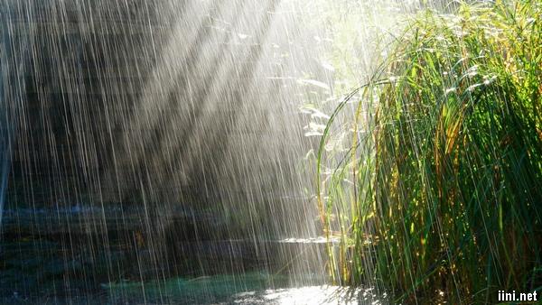 mưa tháng 6