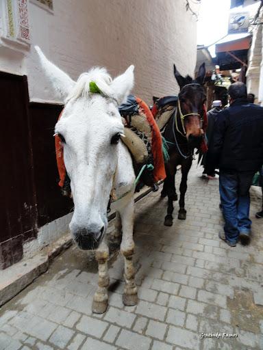 marrocos - Marrocos 2012 - O regresso! - Página 8 DSC07159