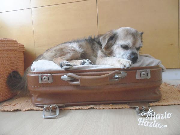 Como hacer cama mascota