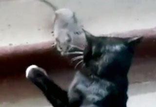 قطة ضد فار