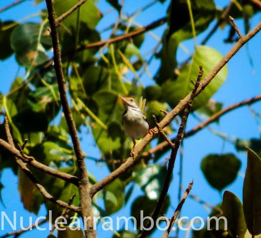 Sunbird of Mumbai