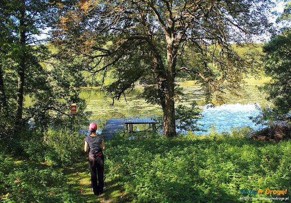 Na trasie Nordic Walking w Hejtusie - staw przed leśniczówką