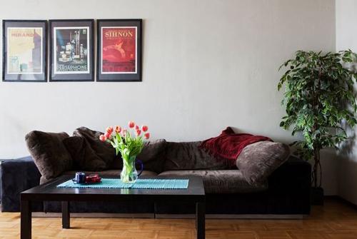 plantas y decoracion