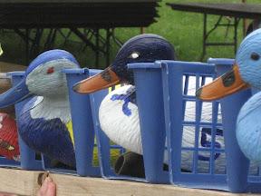 duck race PA