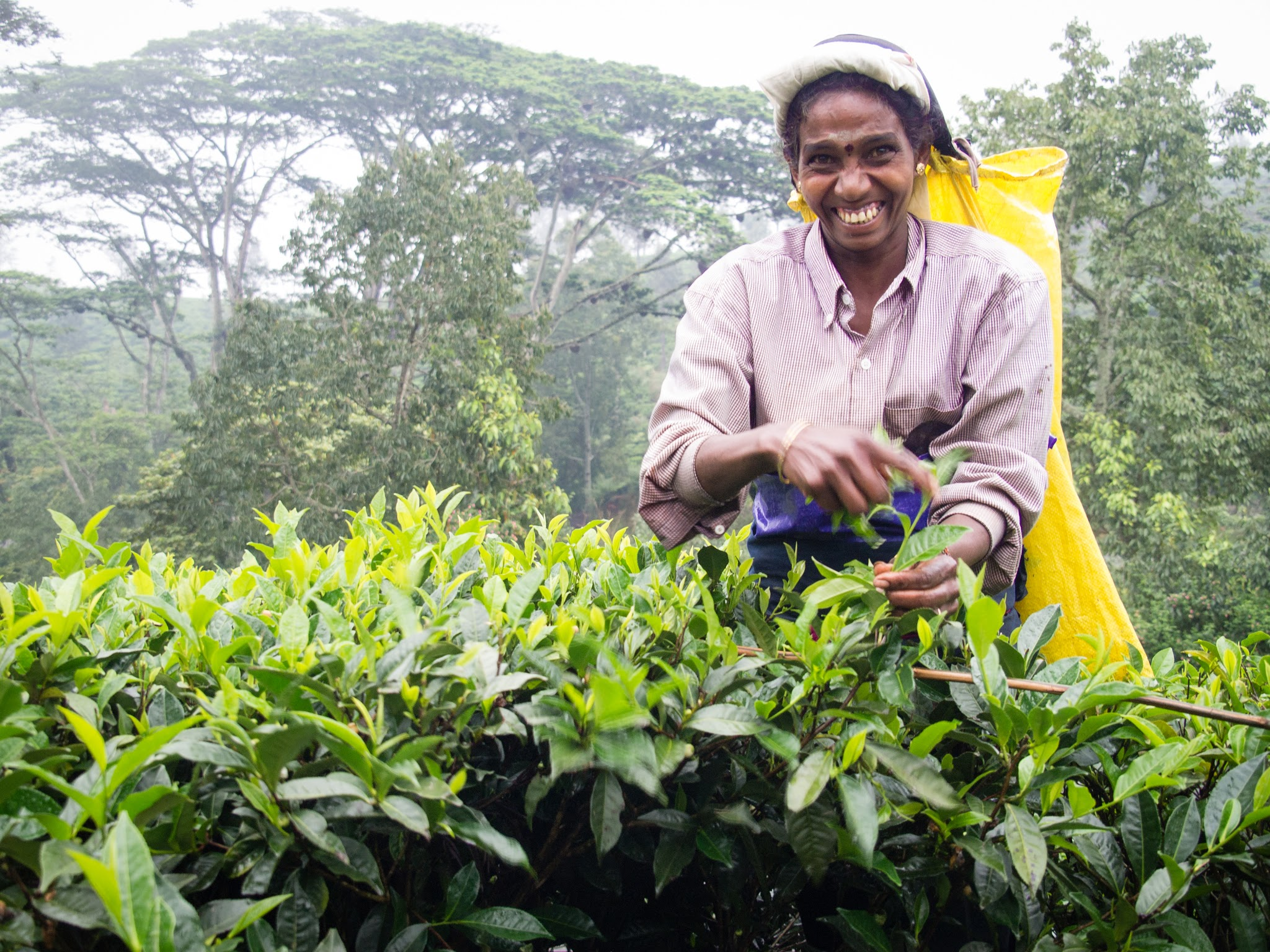 tea picker in Sri Lanka's hill country