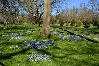carpet of blue flowers