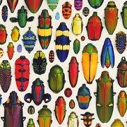 Сонник: насекомые