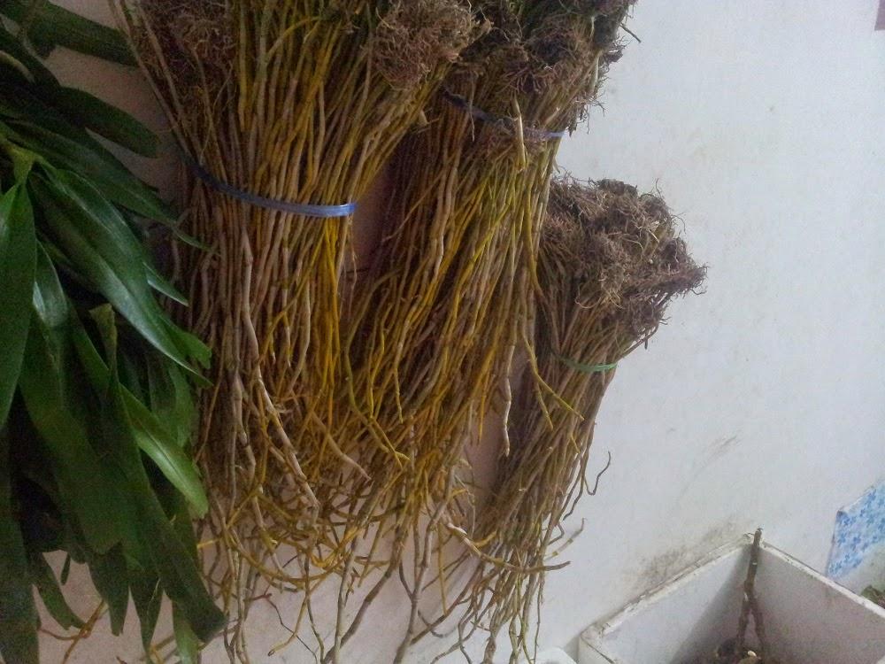 Hoàng thảo ngọc thạch vàng ươm như rơm, có bác nào muốn nhóm bếp không hihi