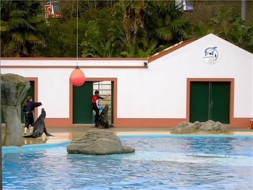 Дельфинарий в Лиссабоне кормление морских львов фото