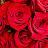 Laura Montes avatar image