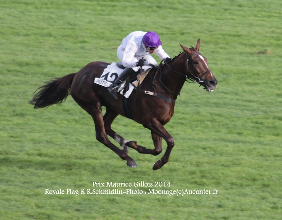 Photos Auteuil 2-11-2014 (48h de l'obstacle) IMG_5486