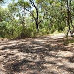 Trail near Mahognay picnic area in Blackbutt Reserve (401260)