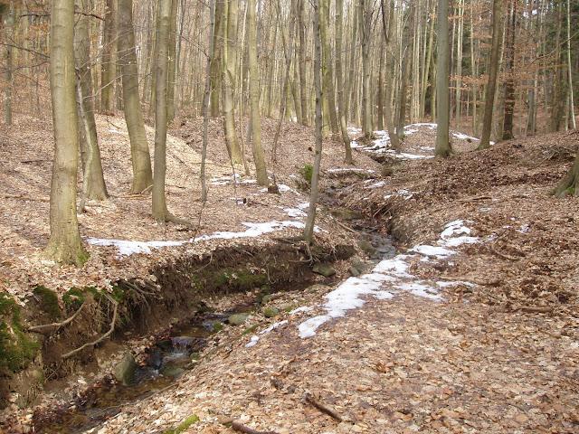 Středověké rýžoviště zlata v lesním údolí U Vodáka