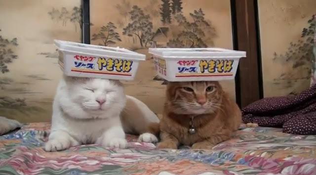 【動画】猫にペヤングソースやきそば